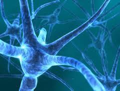 cellule gliali