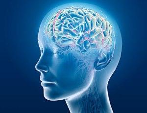 cervello autismo connessioni