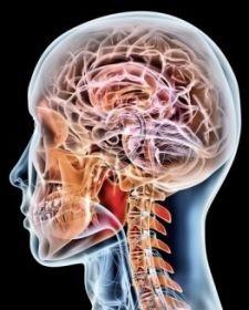 cervello femminile autismo