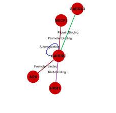 gene sindrome di asperger GABRB3