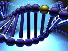 autismo ricerche scientifiche 2013
